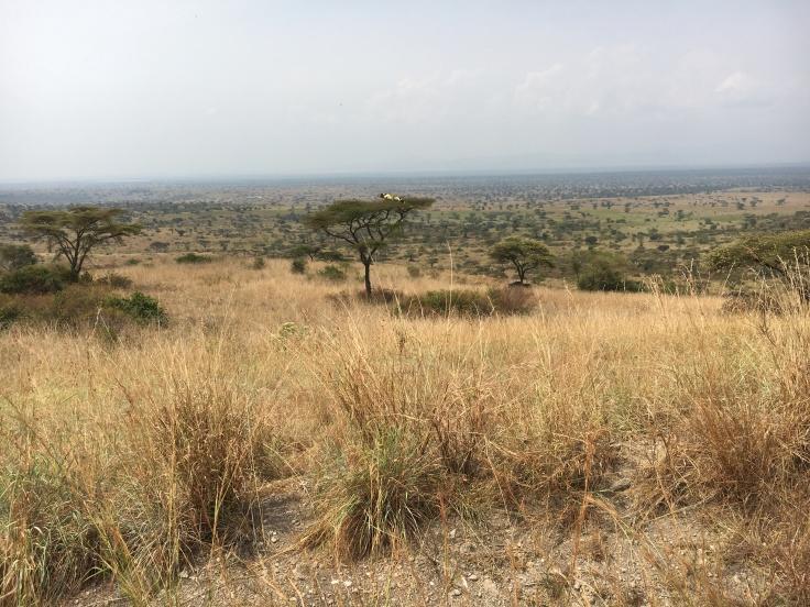 savanna 1.JPG